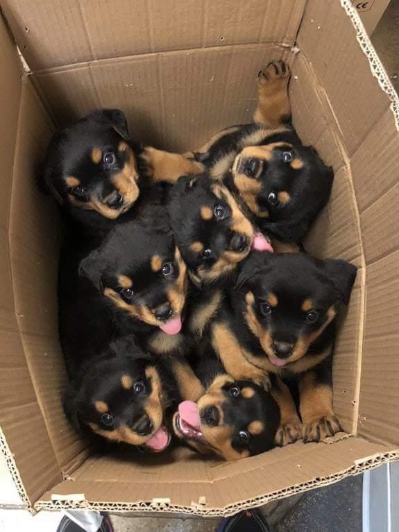 Box of puppies