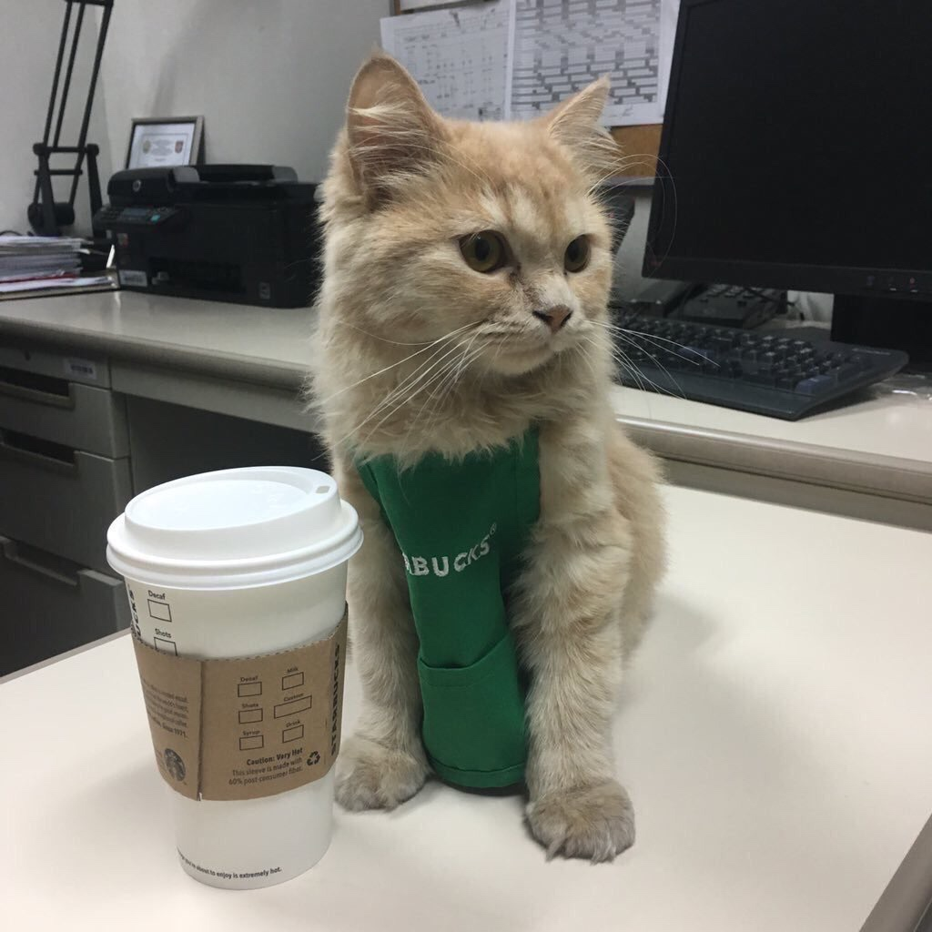 Starbucks Kitty